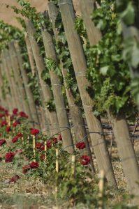 viñas-Lagravera-Arno-Blog
