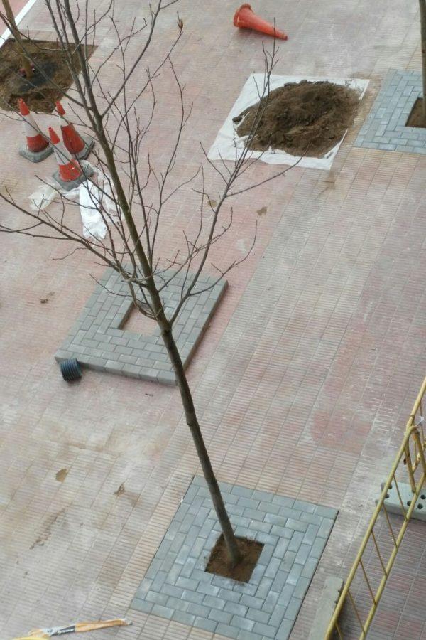 Colocación de jardineras y árboles en la avenida balmes, lleida. Arnó