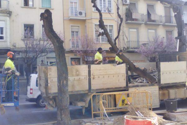Eliminación de los árboles viejos. Carril bici-lleida-arno (2)